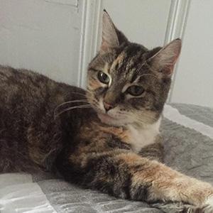 Marissa's cat Helen