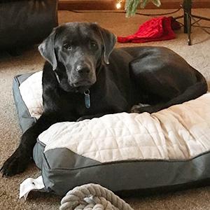 Tabitha's dog Murphy
